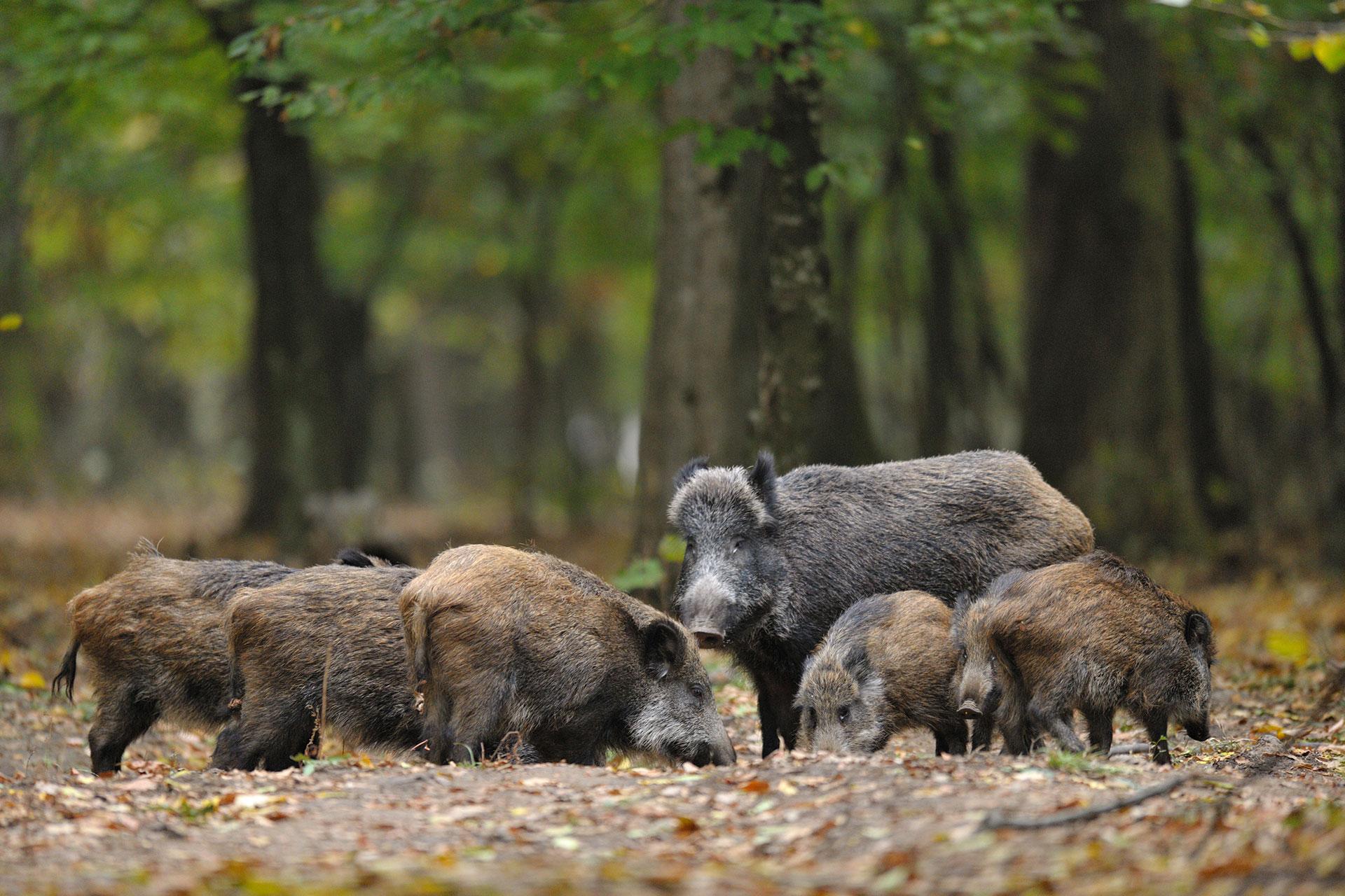 Wildoekologie Artenschutz Naturbildung