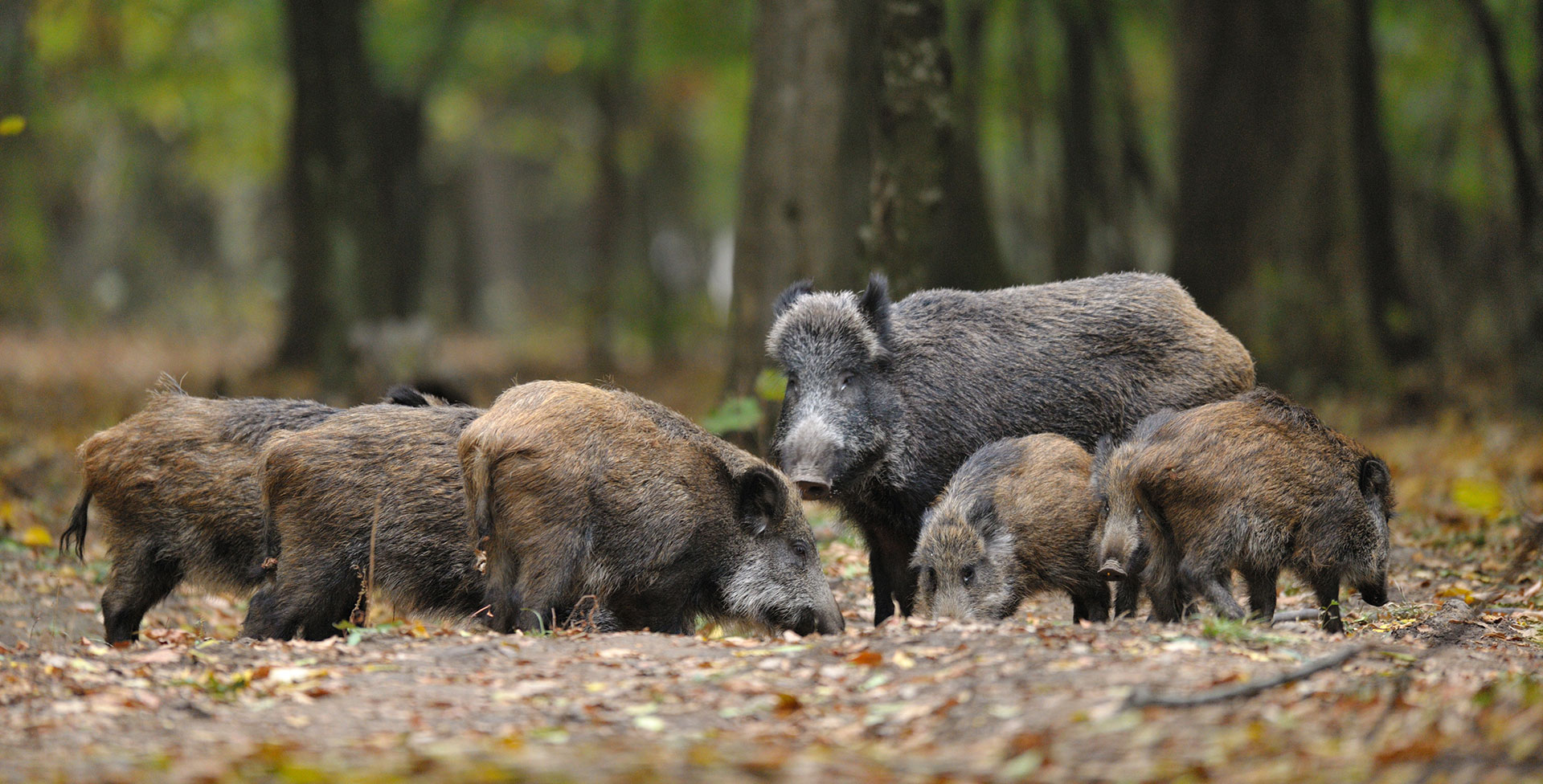 wildoekologie-artenschutz-naturbildung